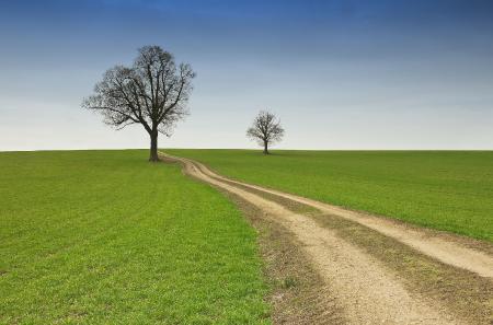 Заставки дорога в поле, зеленая трава, одинокие деревья, тропинка