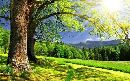 Фото дерево, мох, зеленое поле, лужайка