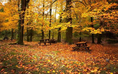 Заставки деревянные столики, желтые листья, листопад, осенний пейзаж