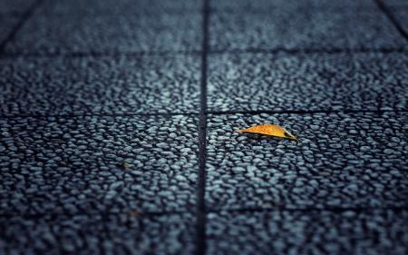 Заставки улица, лист, фон