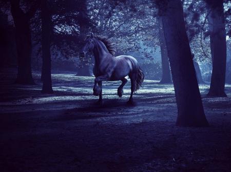 Картинки конь, лес, сумерки, темнота