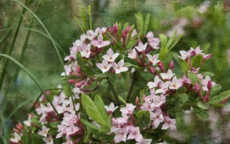 Заставки цветы, природа, текстура, стиль