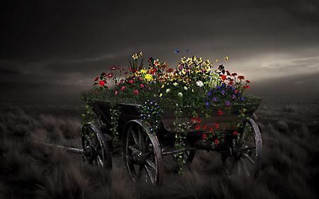 Заставки телега, цветы растут, мрачный вид, поле