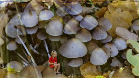 Картинки девочка, грибы, фон, стиль