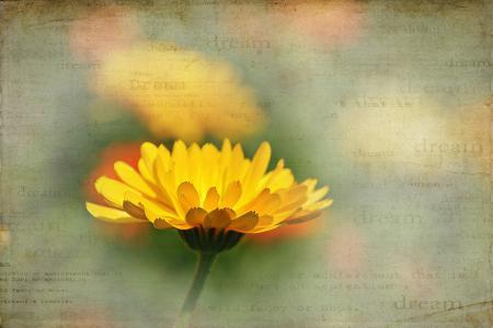 Заставки цветок, лето, фон, стиль