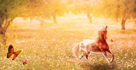 Рисунки арт, лошадь, животное, природа