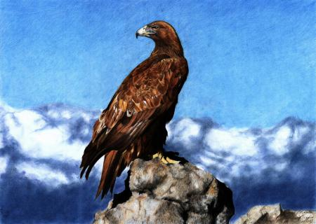 Картинки арт, рисунок, орёл, птица