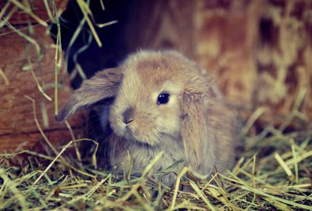 Картинки трава, кролик, серый