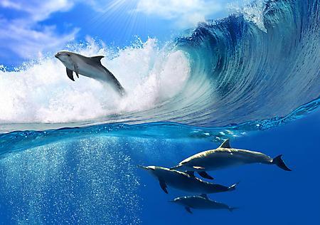 Заставки дельфины прыгают, на волнах, плавают под водой, 5400x3795 px