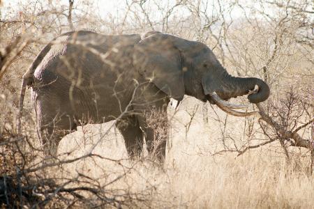 Картинки слон, природа, фон