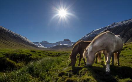 Фото кони, утро, горы, пейзаж