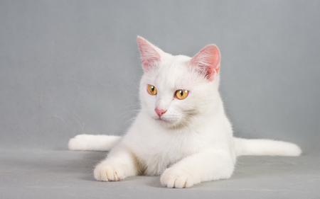 Заставки кошка, взгляд, фон