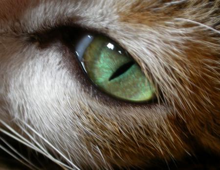 Картинки животное, кошачий глаз, зеленый, усы