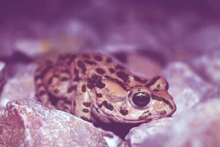 Картинки лягушка, земноводное, глаз