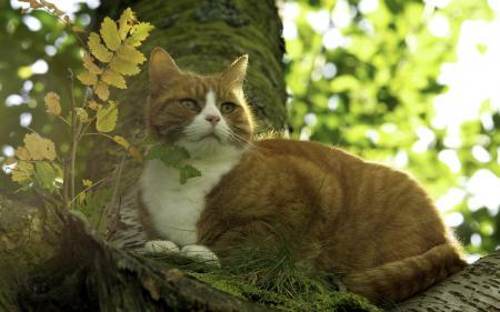 Обои кошка, природа, фон