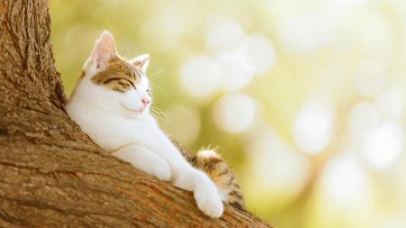 Фото дерево, кот, кошка, природа