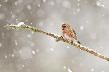 Картинки ветка, птица, снег, зима