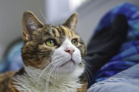 Картинки кот, глаза, зеленые, смотрит