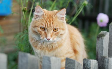 Картинки кошка, взгляд, фон