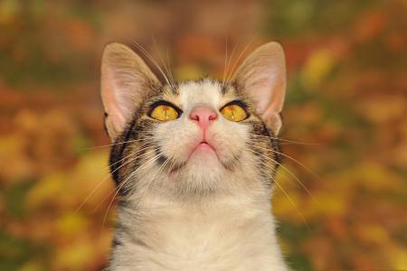 Фотографии кошка, смотрит, вверх, глаза