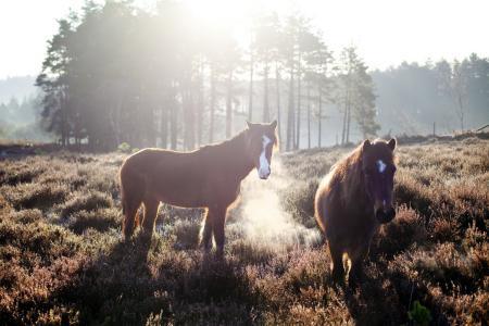 Фото кони, поле, утро