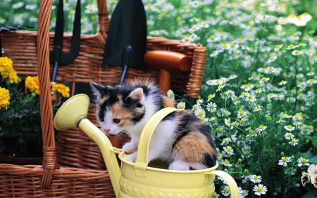 Заставки cat, котенок, кот, кошка