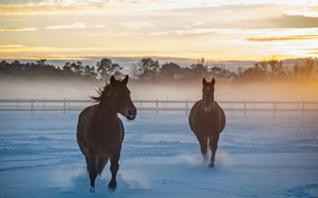Фотографии кони, утро, снег, поле
