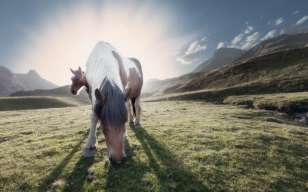 Обои кони, горы, утро, природа