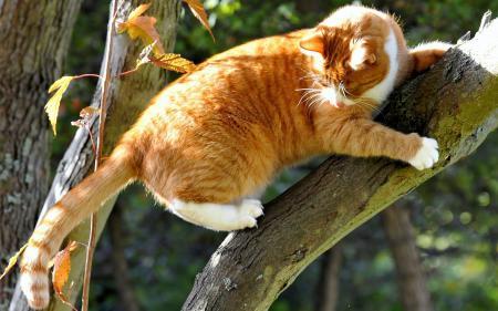 Обои дерево, ствол, кошка, кот