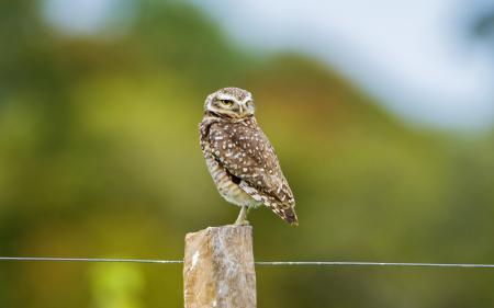 Фотографии сова, птица, забор