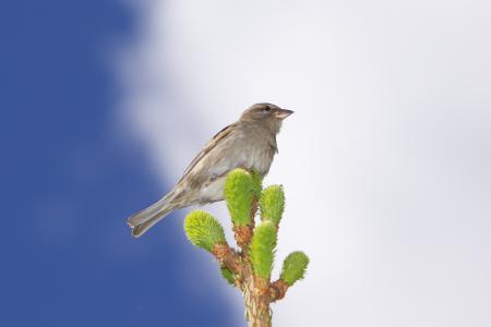 Фото животные, птица, воробей, листья