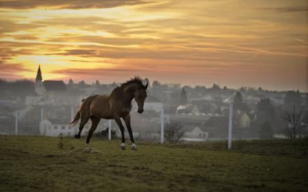Обои конь, закат, поле