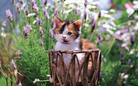 Обои cat, котенок, цветы, киса