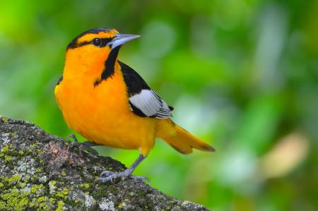 Картинки птица, желтая, яркая, камень