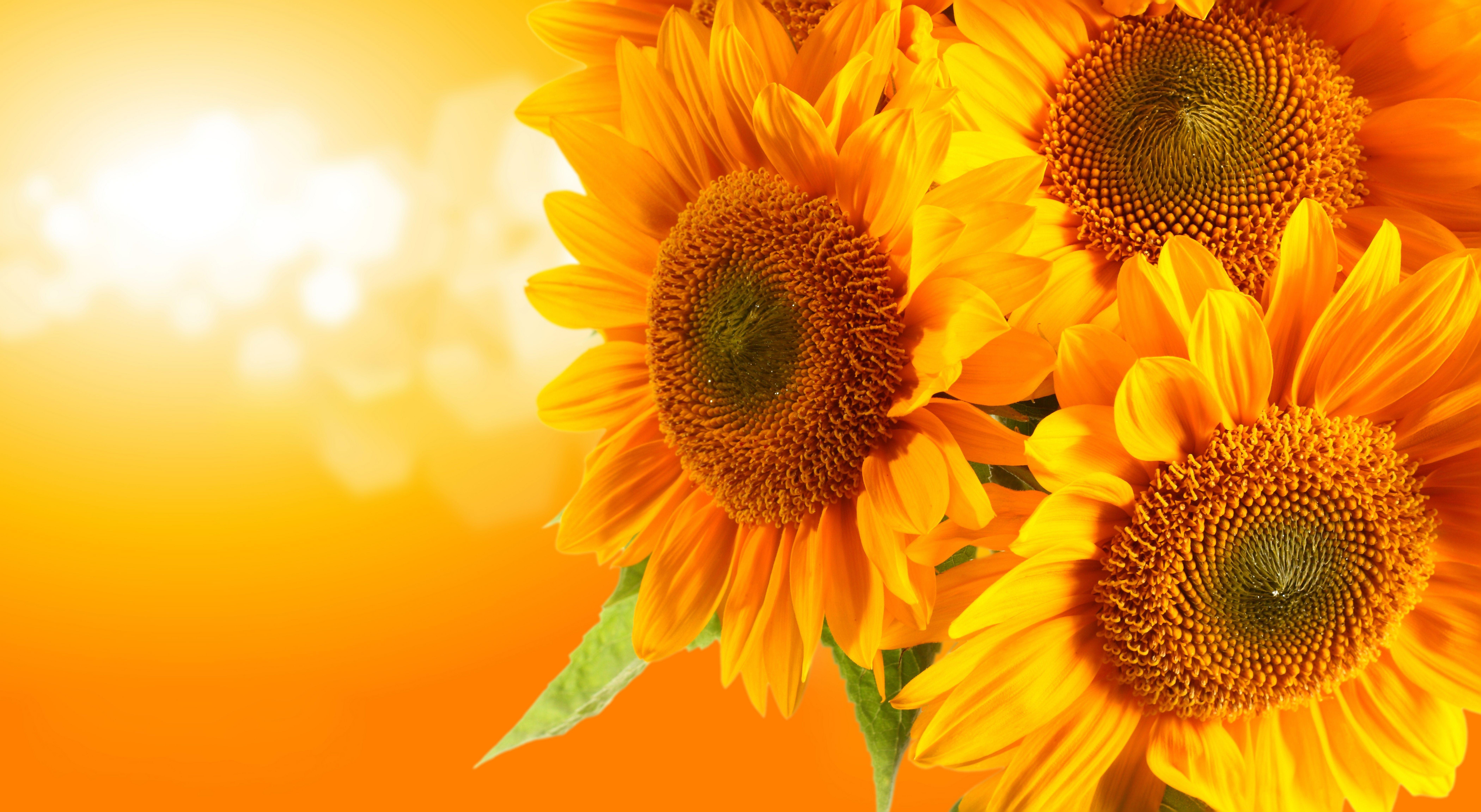 На тему цветы каждый день на сайте вас