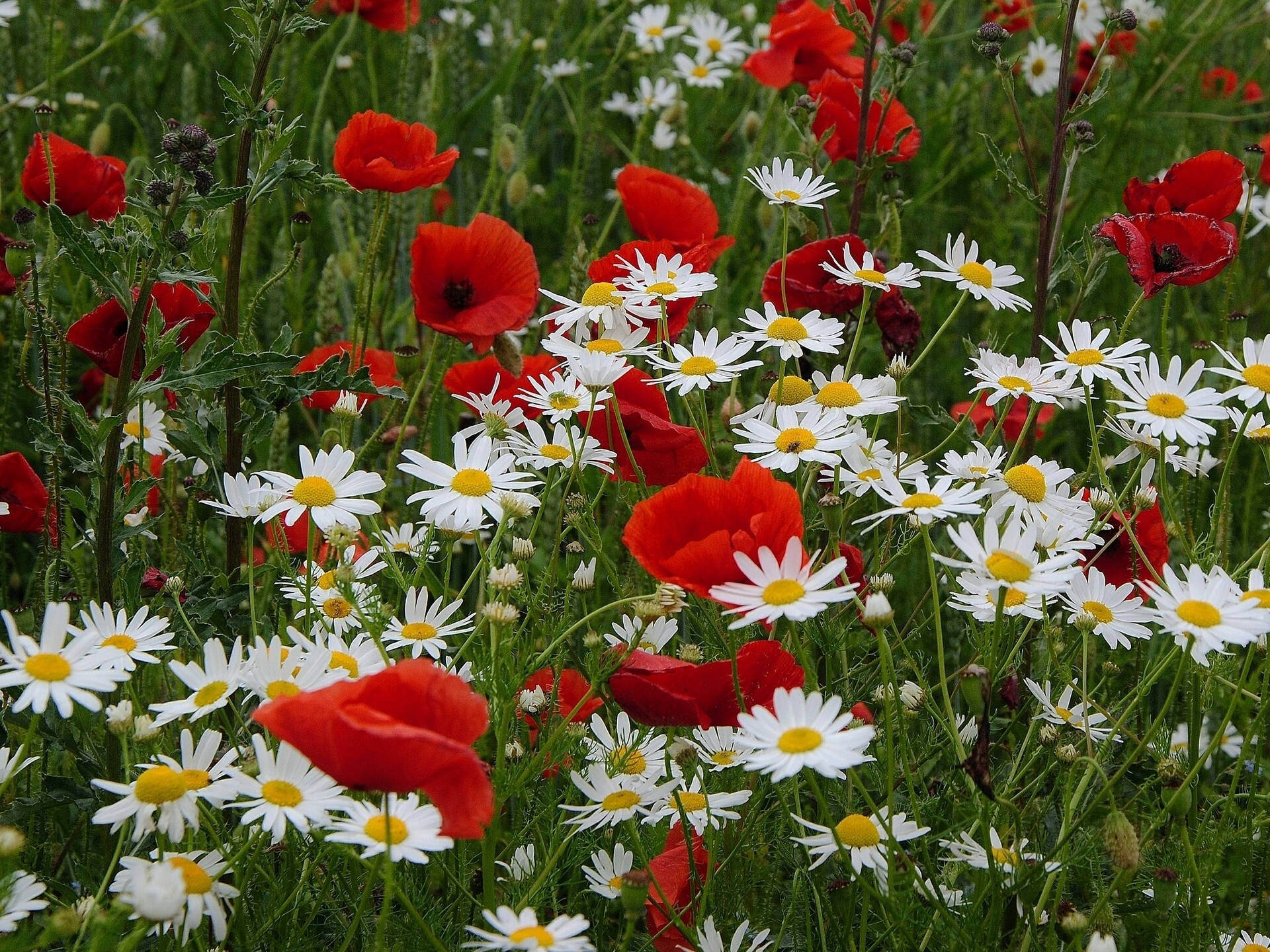 обои на рабочий стол скачать бесплатно 1920х1200 цветы