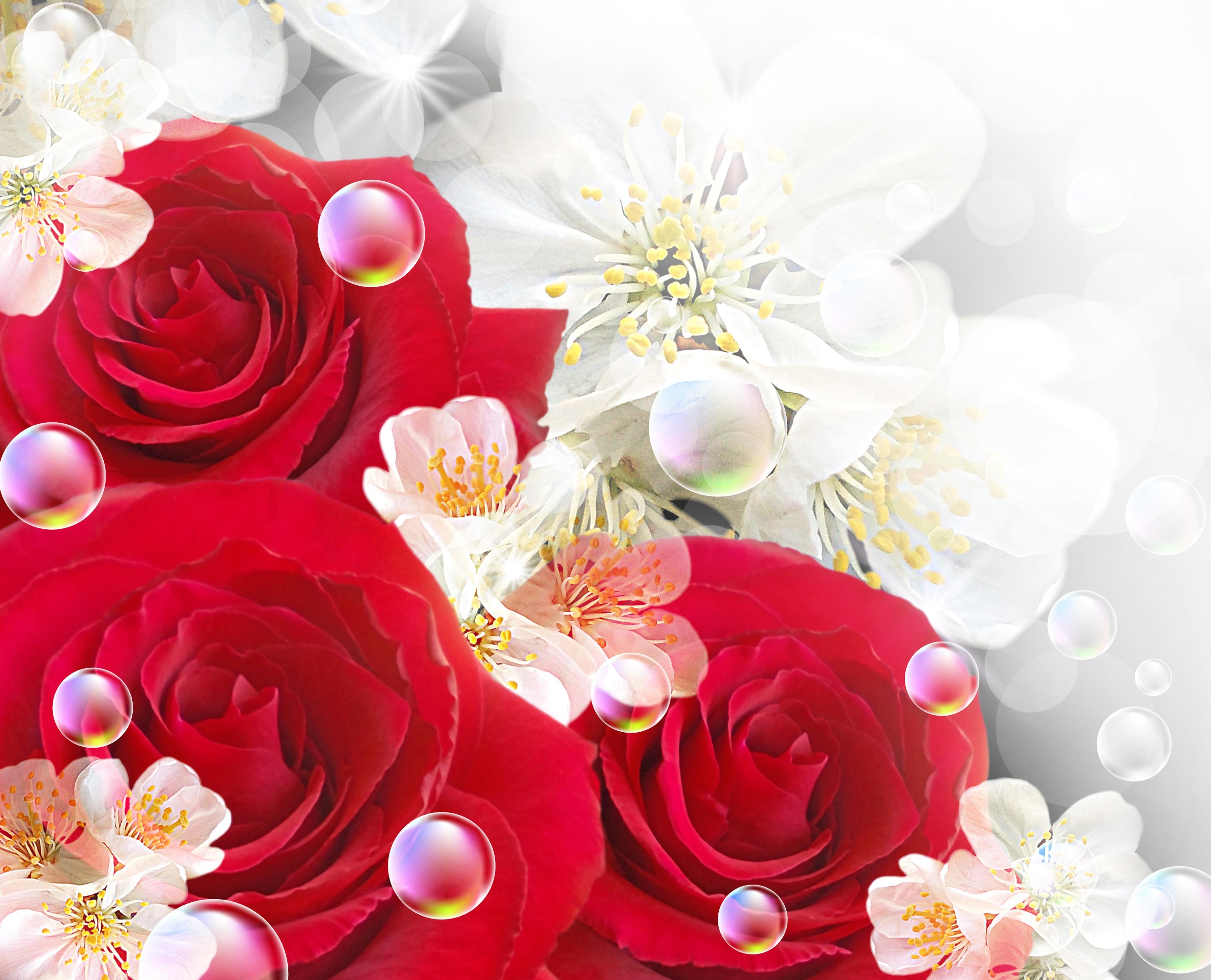Обои цветы скачать на рабочий стол, фото розы красные  Цветочки Розы