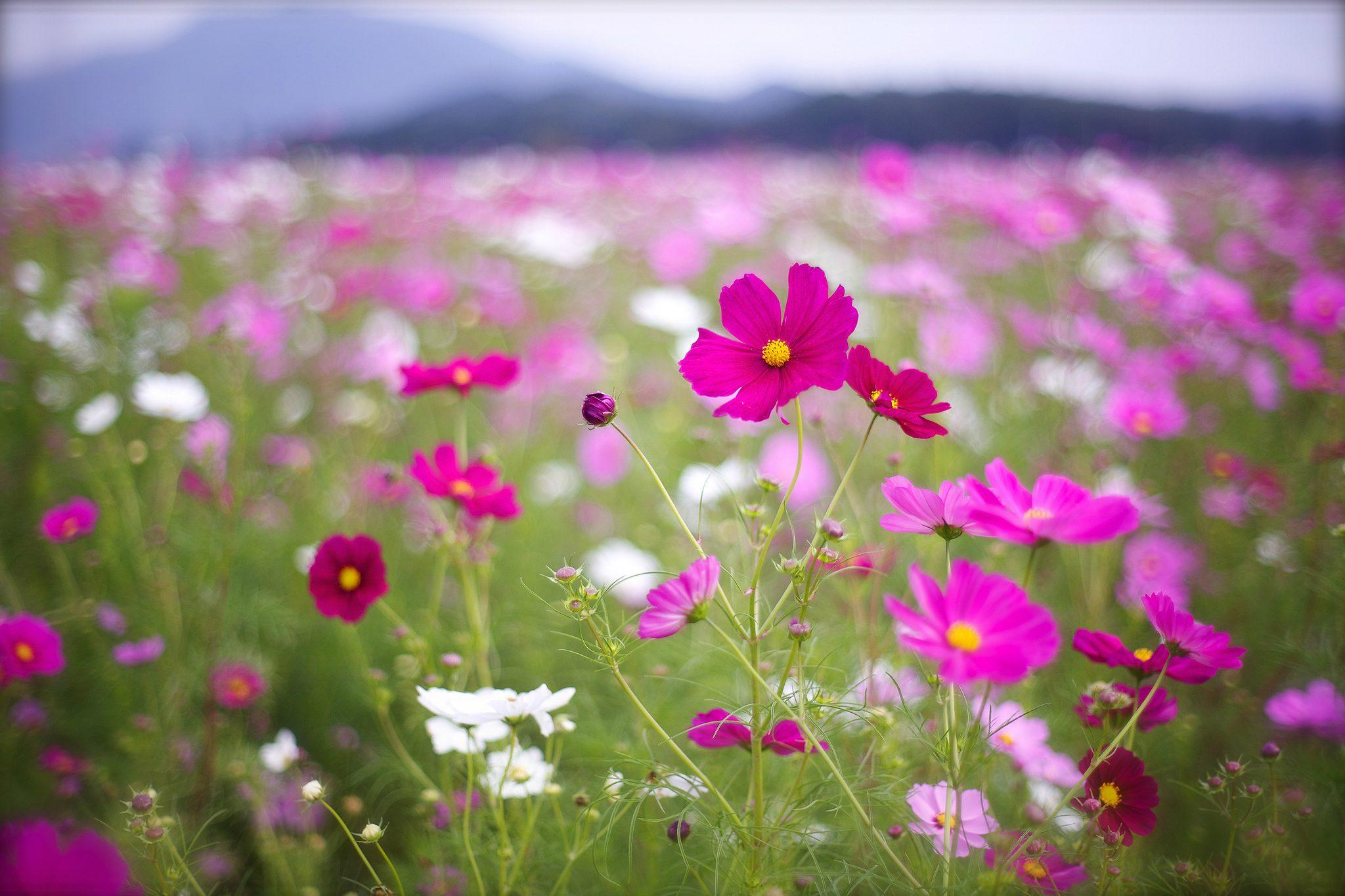 Обои полевые цветы скачать на рабочий