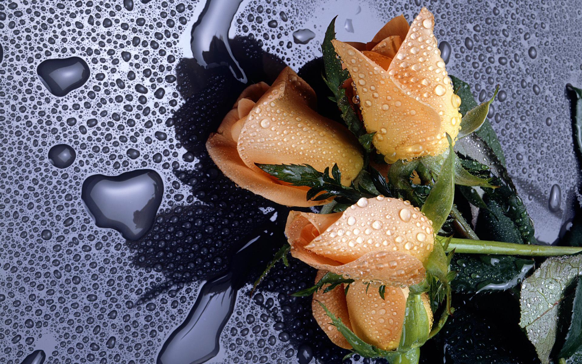 Розы на фото лучшие картинки красивых цветов роз - 20cba