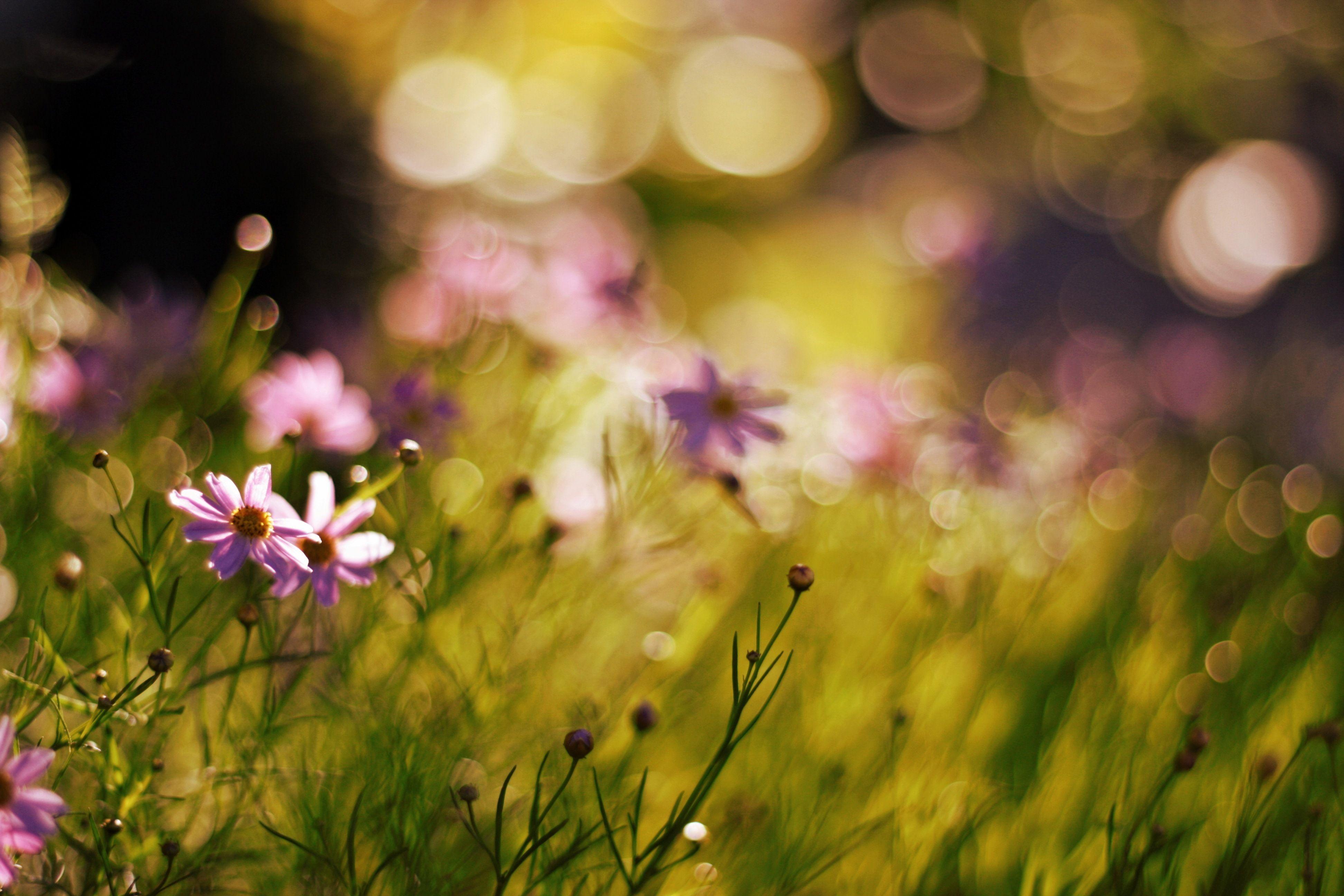 Обои размытый фон, цветок. Цветы foto 15