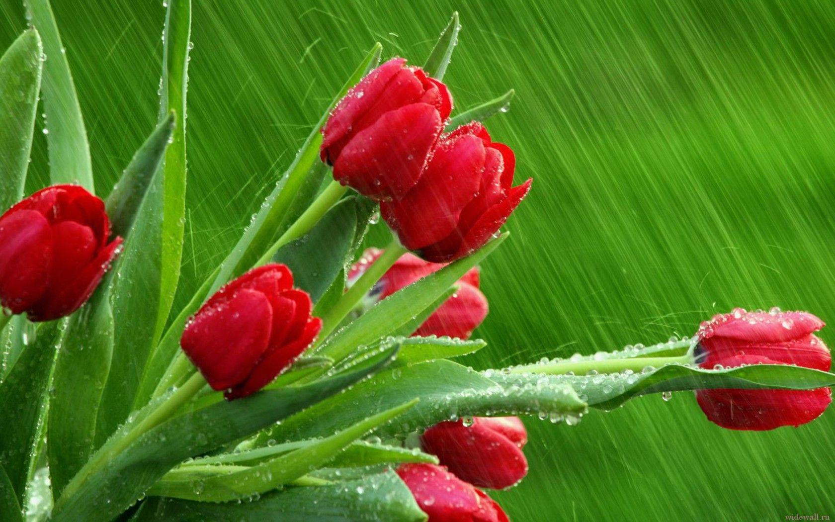 Обои мокрые цветы скачать на рабочий
