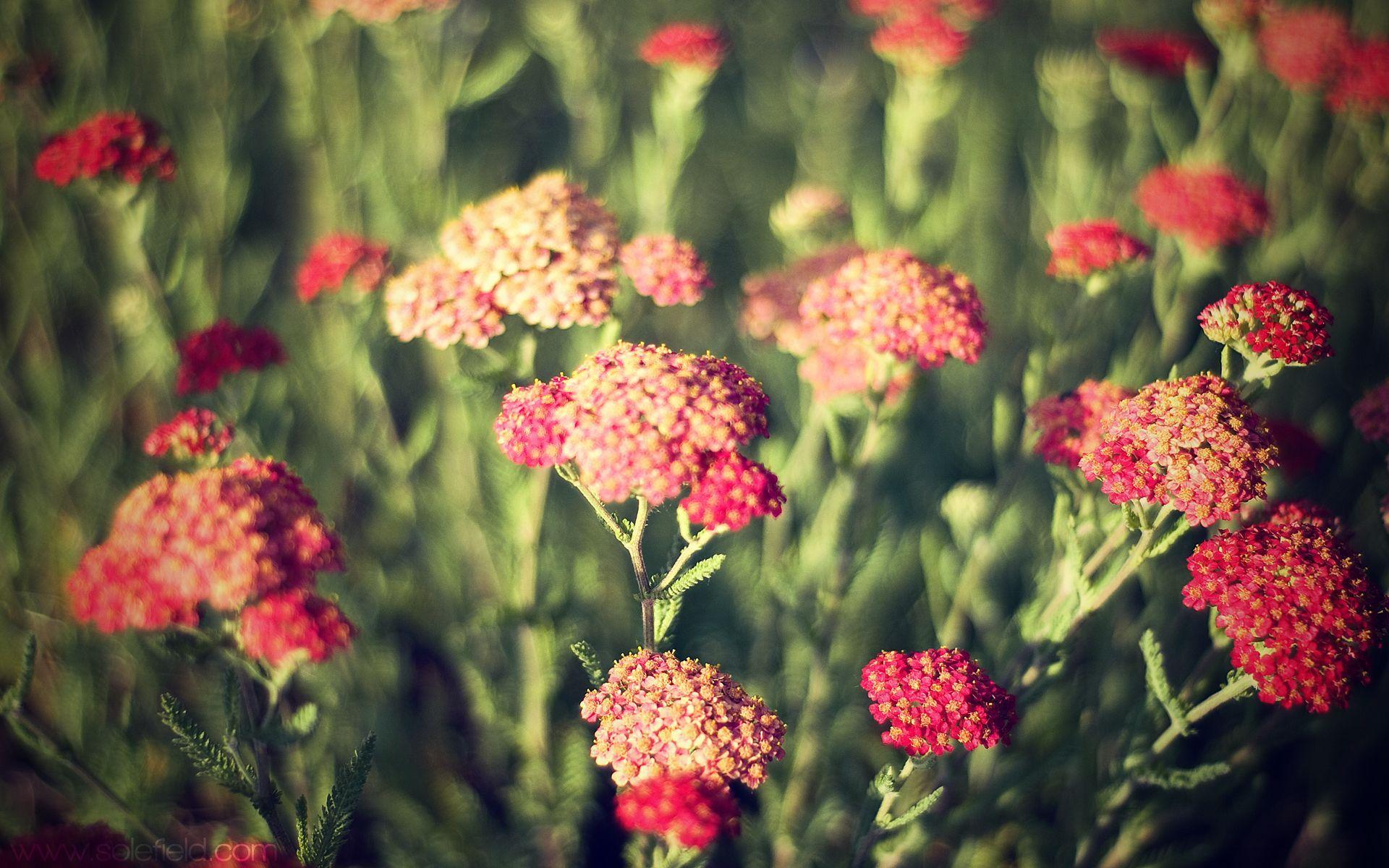 картинки цветов в хорошем качестве: