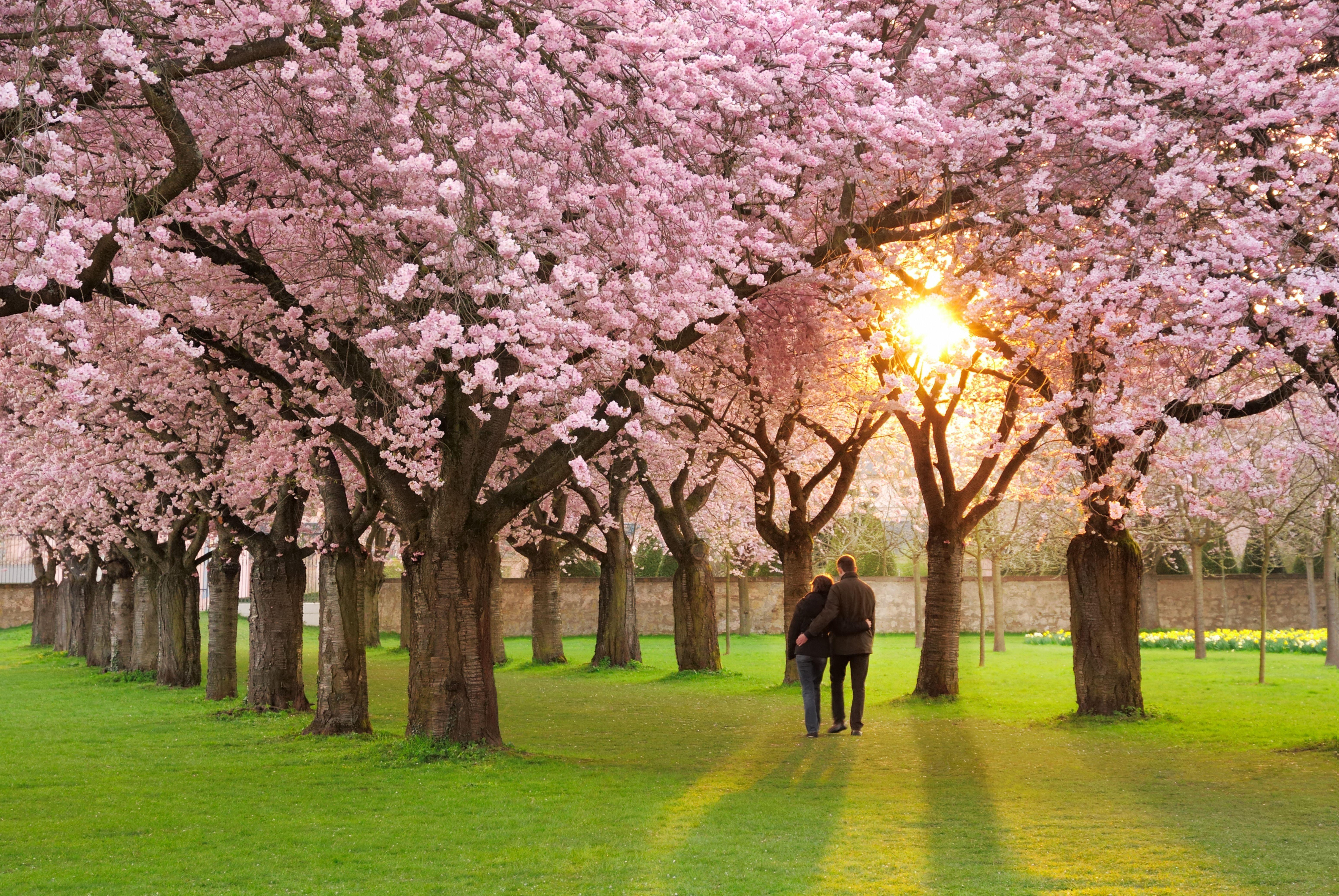 Обои Весна, цветение, влюбленные, цветы. Настроения foto 13
