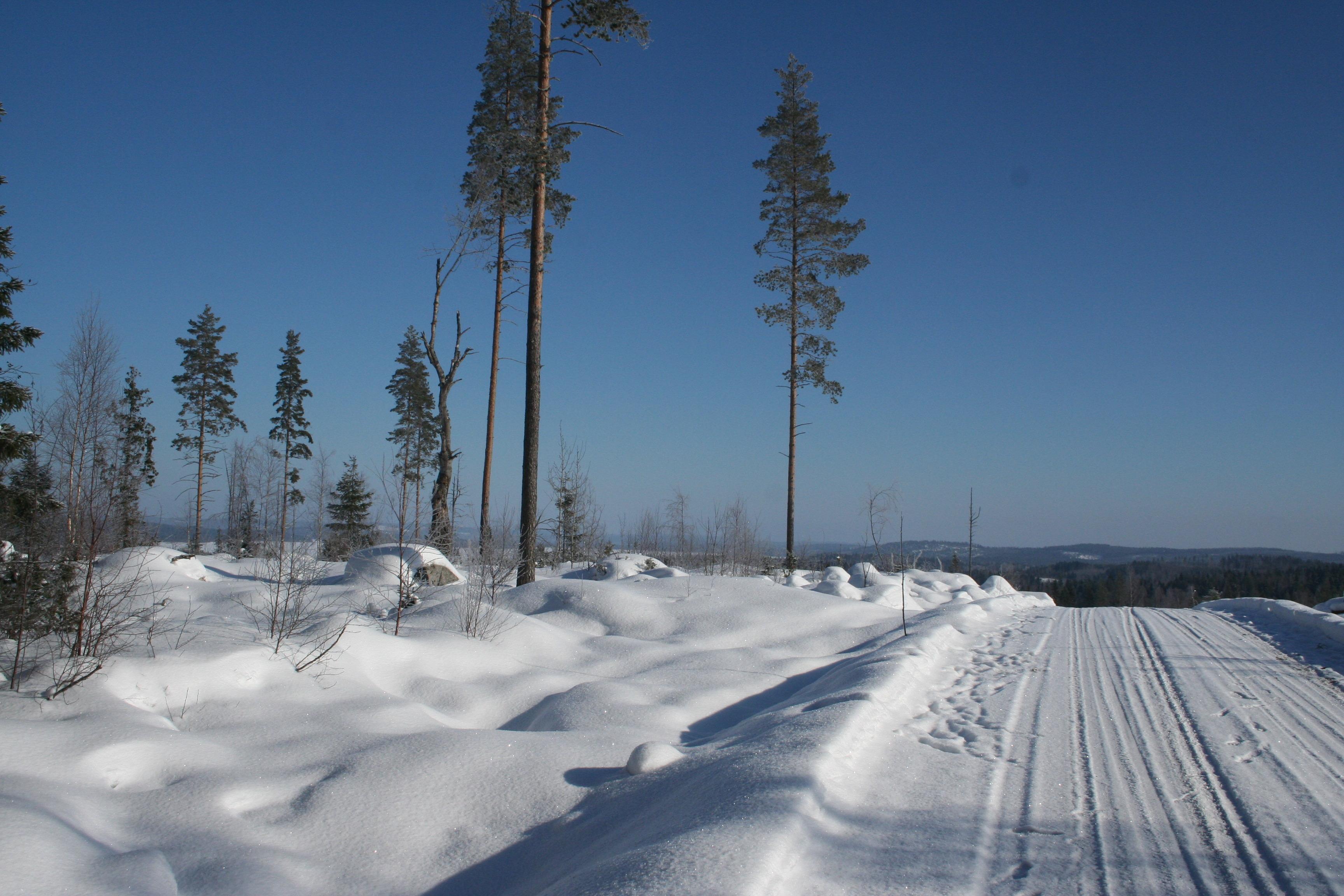 Бесплатная фотография Зима Озеро Лед Наледь Ветки