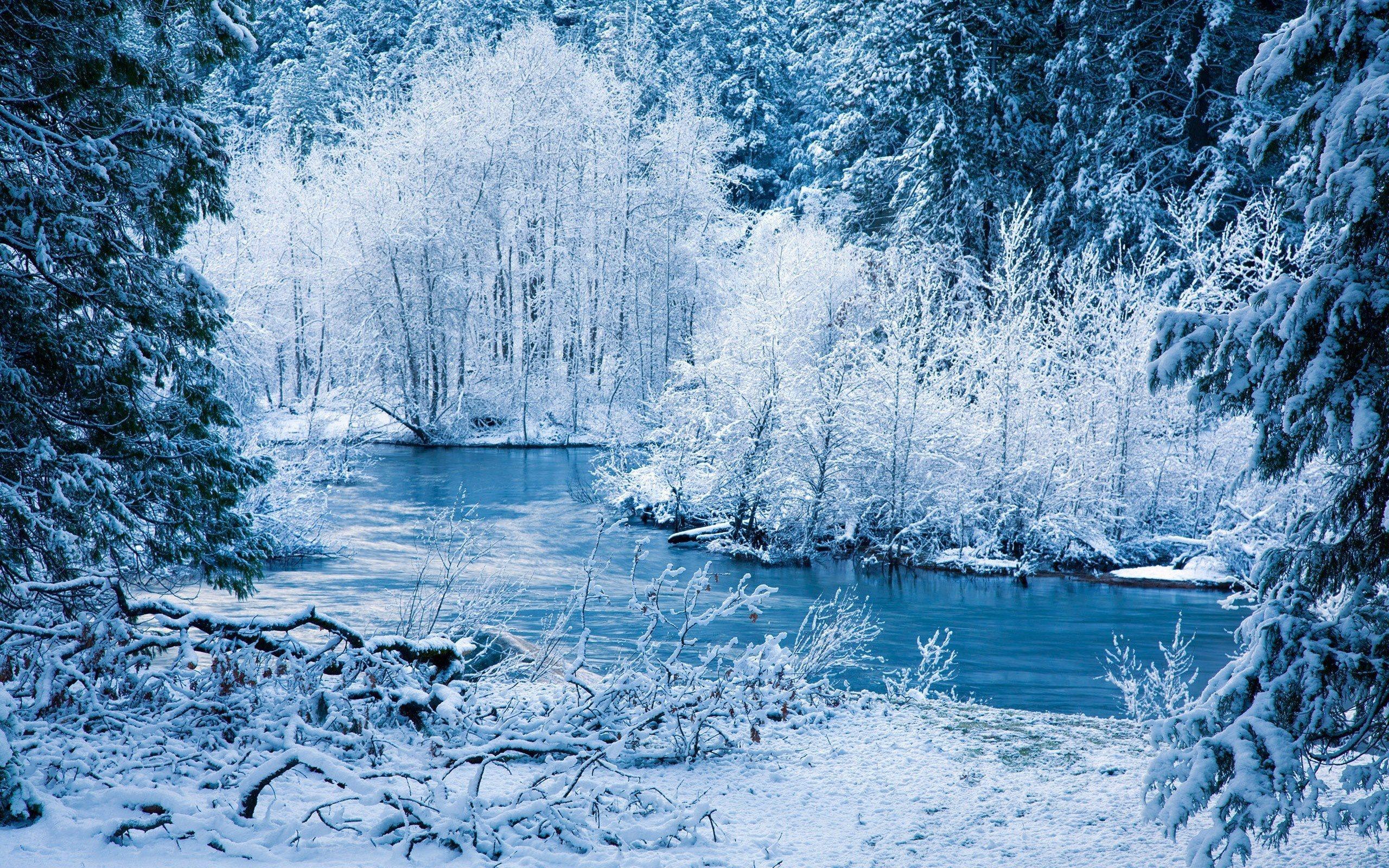 Фото зимний пейзаж деревья под снегом