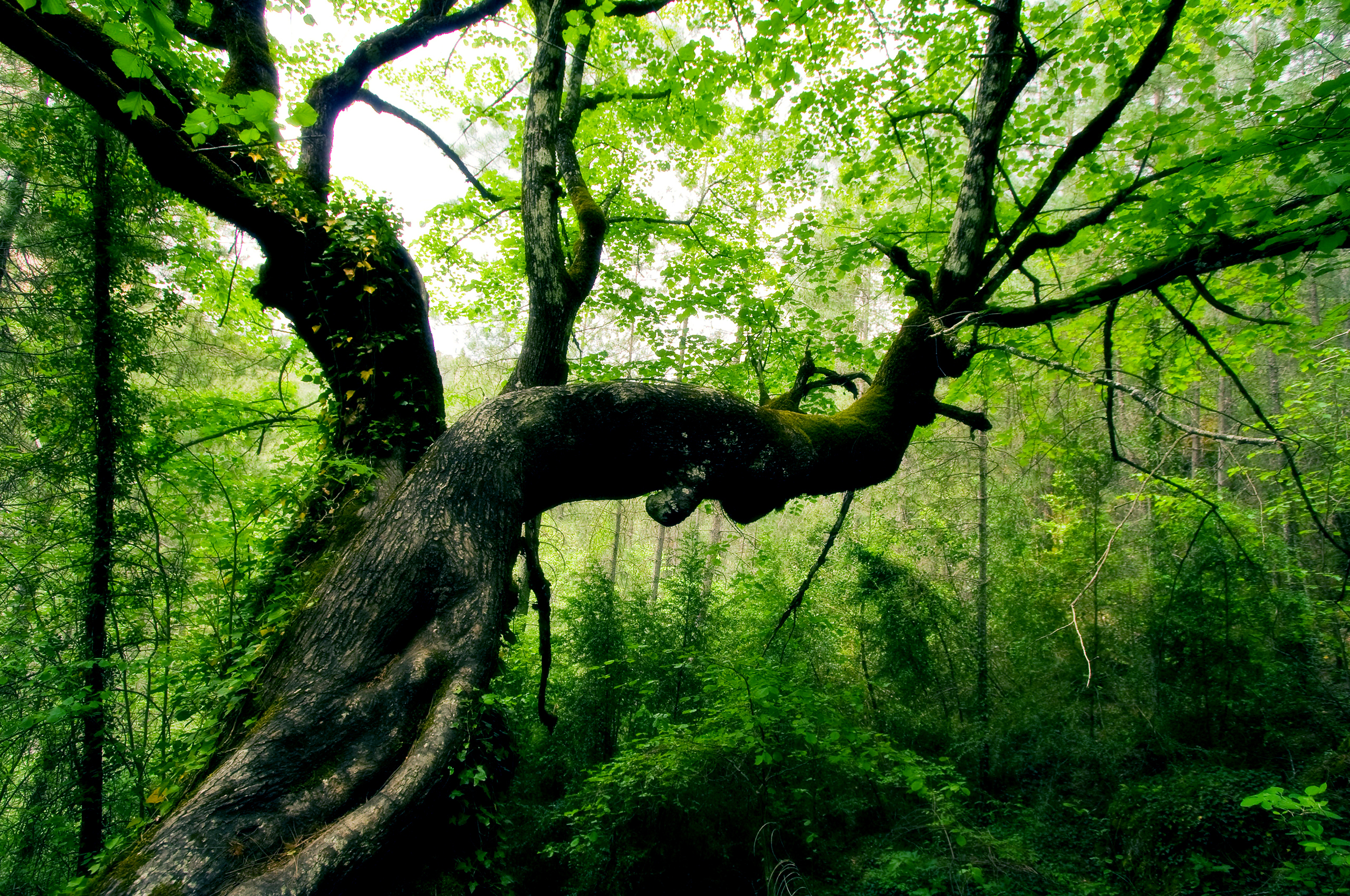 Nagaland jungal x desi movi pics sex pictures