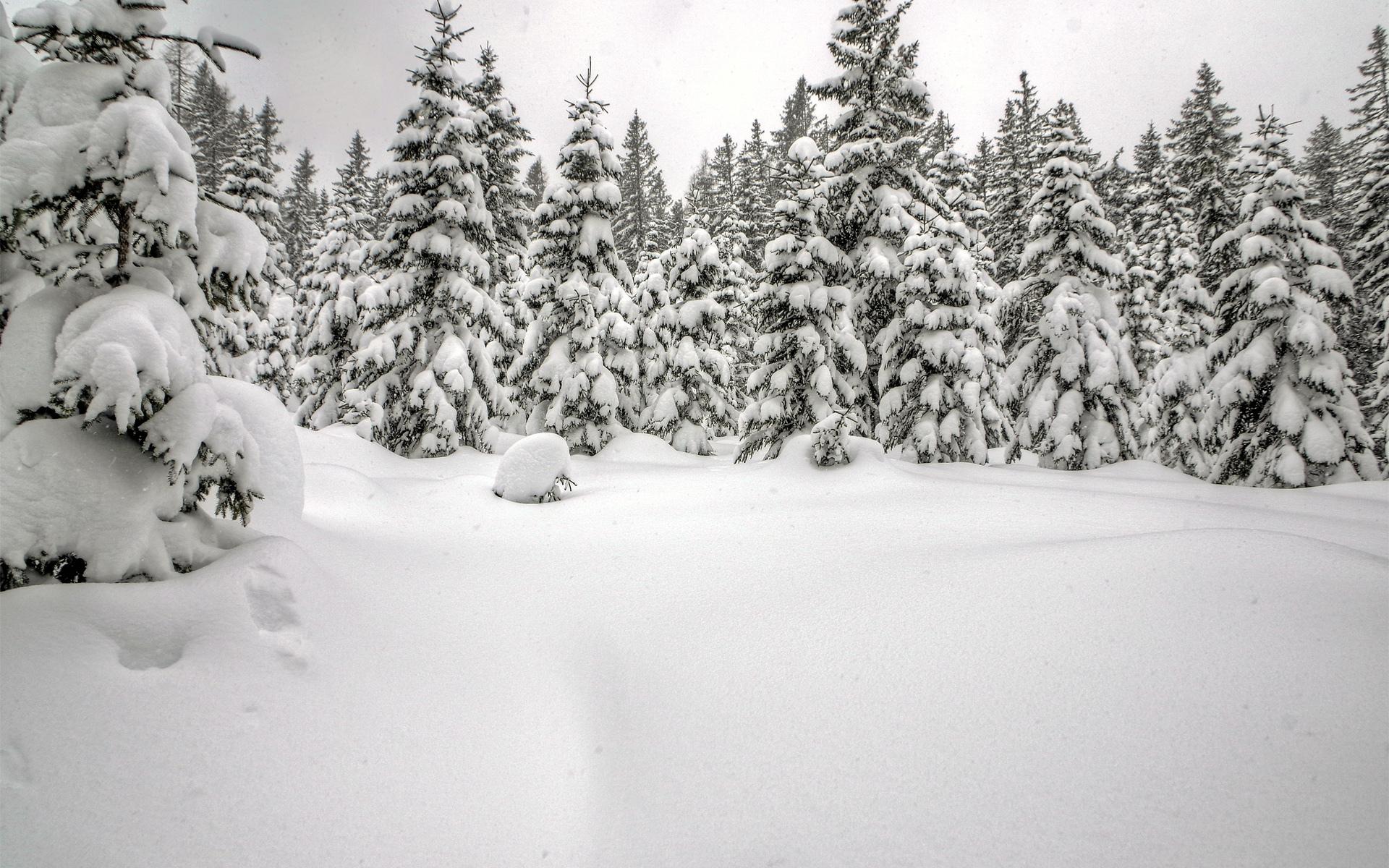 Зима фотографии обои для рабочего стола фото