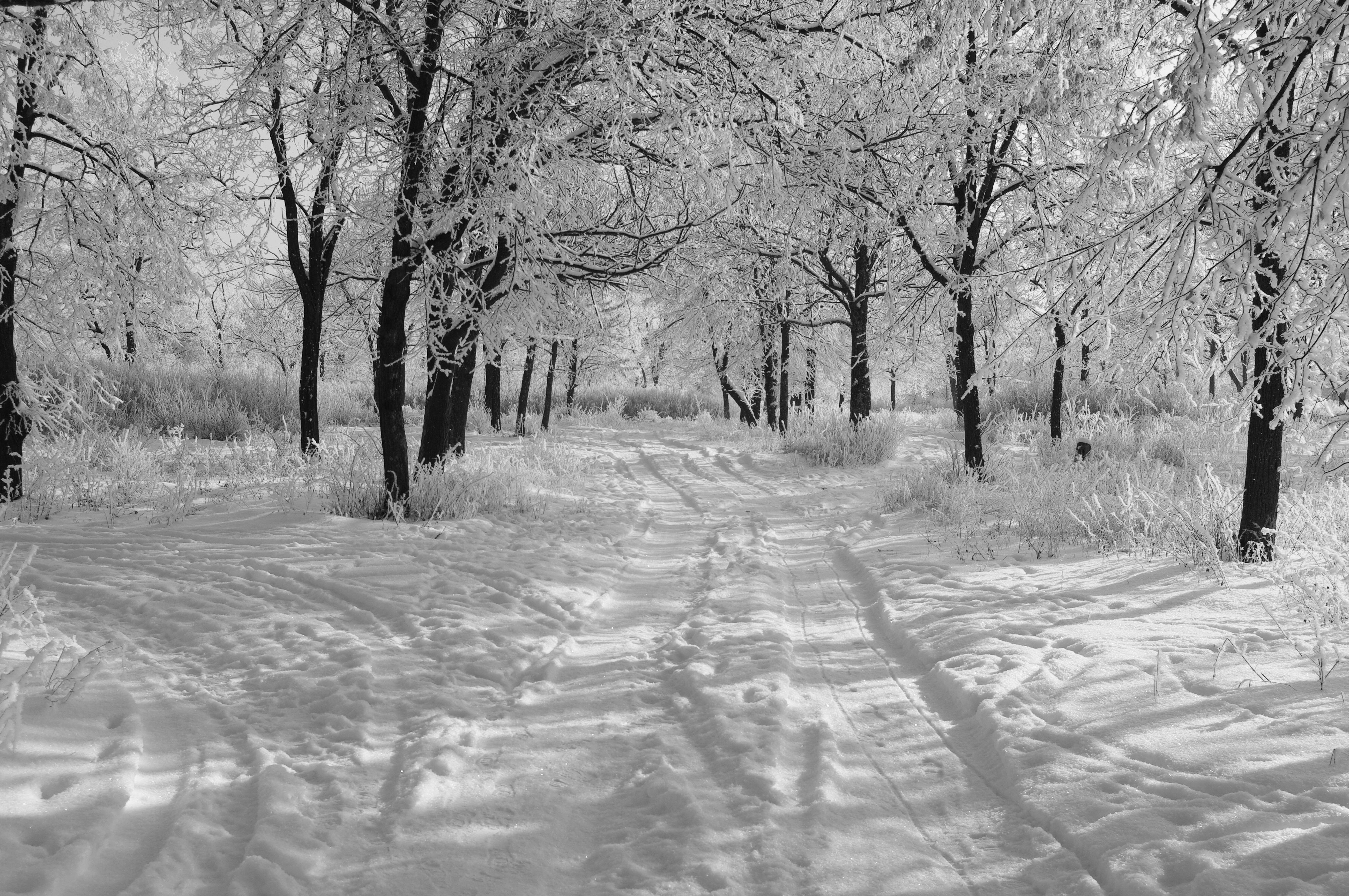 Черно белая зима 9 фотография