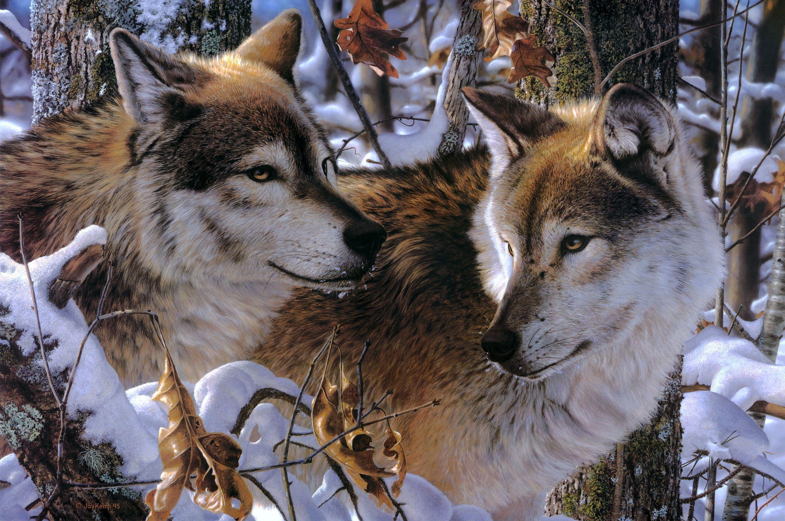 Рисунки волки семья зима в лесу снег