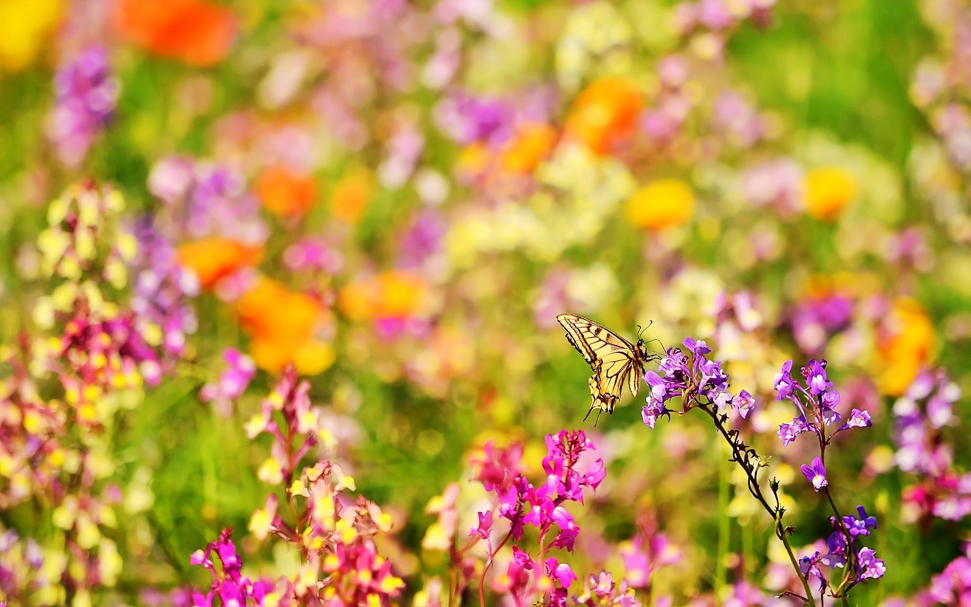 широкоформатные картинки цветов:
